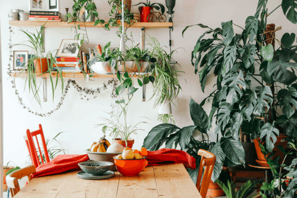 10 Best Air Purifying Plants NASA-approved
