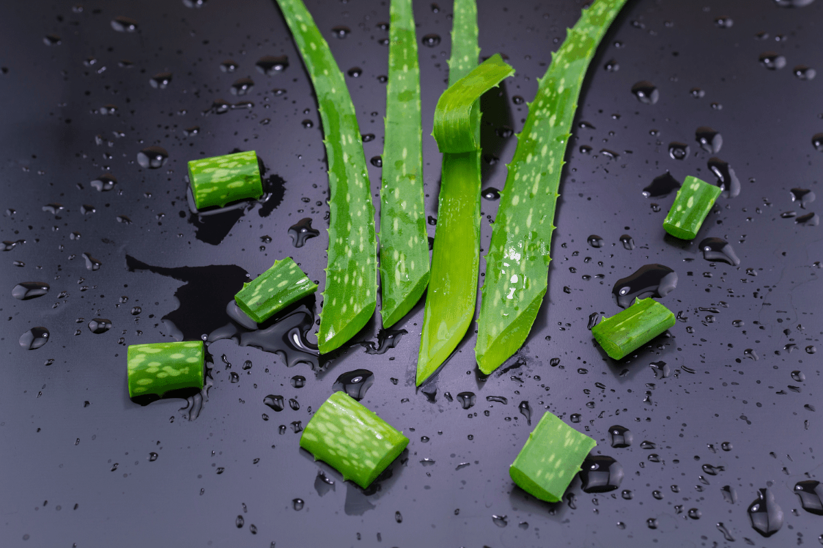 Aloe Vera Unique Benefits and Uses Skin, Hair and More