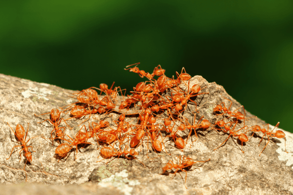 Best Non Toxic Ant Killer solutions for Indoors