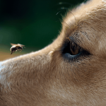 How to Keep Flies Off my Dog? Easy Tips You Can Do at Home