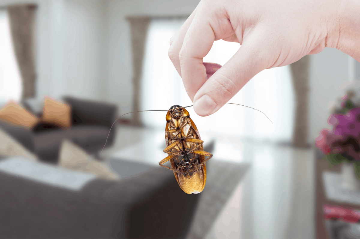 Amazing Natural Insecticide for Your Home