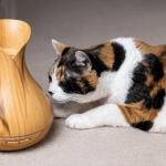 What Essential Oils are Safe to Diffuse Around Cats