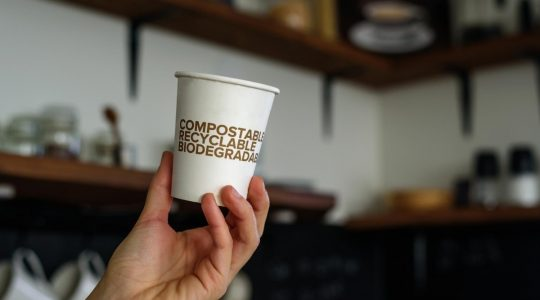Difference Between Degradable, Biodegradable and Compostable