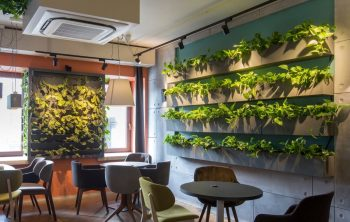 How To Make A Living Wall In Your Home