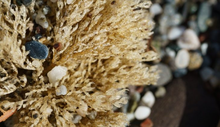 How To Prepare Sea Moss And Enjoy Its Benefits