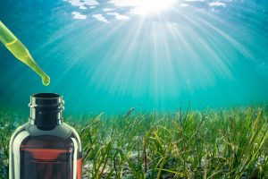 Oceans Alive Marine Phytoplankton Side Effects