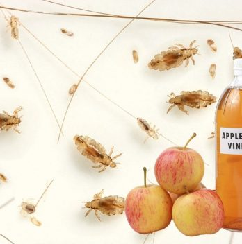 Using Apple Cider Vinegar for Parasite Removal