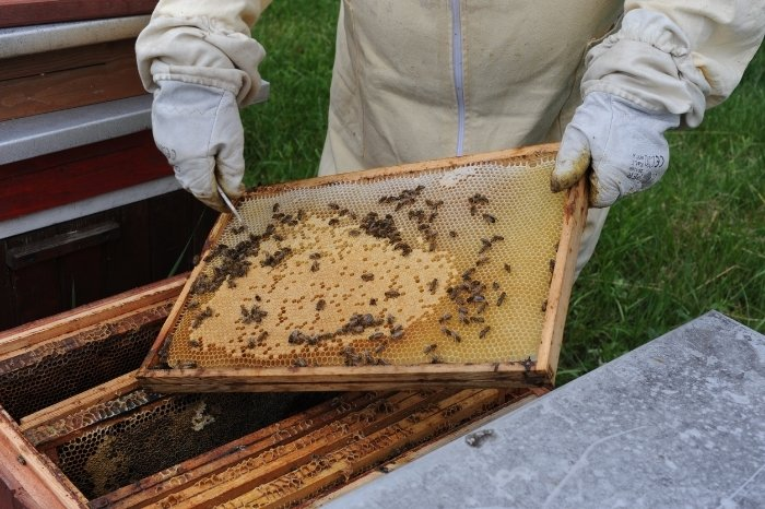 What Is Beeswax