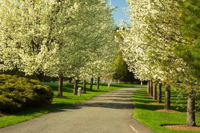 What Is The Bradford Tree